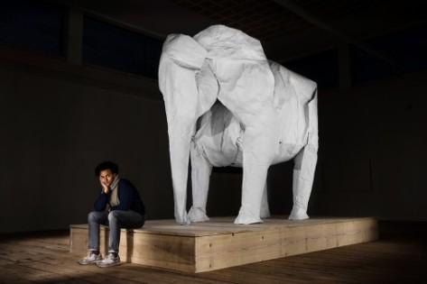 elephant005-509x339